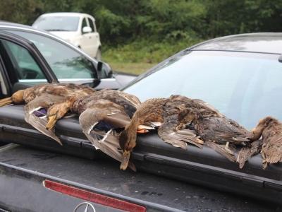 sezona-lova-na-patke-Mali-Zvornik